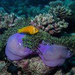 7 best things to do in MALDIVES