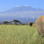 Until Spring 2021! Cheap Turkish Airlines flights from Finland to Kilimanjaro from €358!