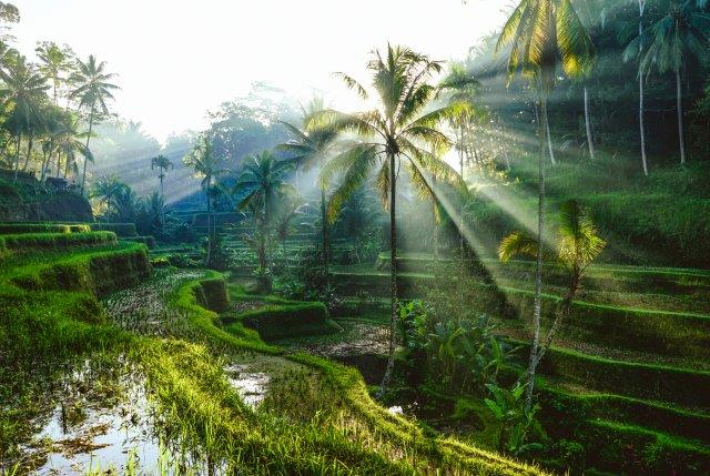 Cheapest flight deals to Bali Indonesia airline promotional discount sale deals Flynous