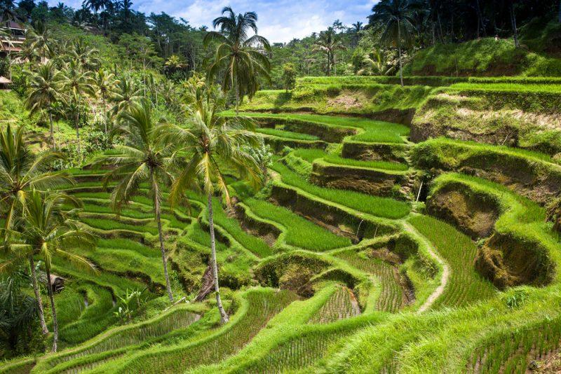 ST Bali ph Manamana 800x534 1