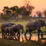 Spring & Peak Summer 2021! Cheap 5* Qatar Airways flights from Prague or Budapest to Botswana from only €399!