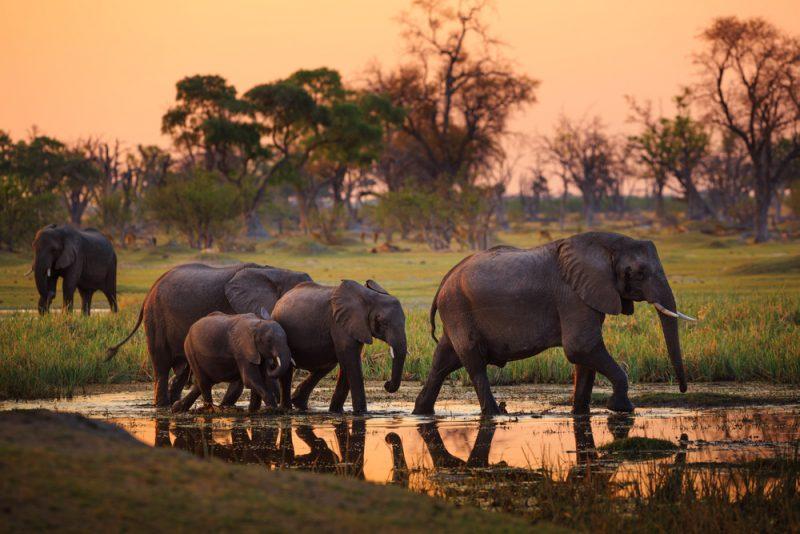 ST Botswana 800x534 1