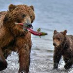 Until Spring 2021: Cheap flights from Moscow to Lake Baikal or Kamchatka for €88!