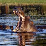 SUMMER: European cities to Gabarone, Botswana from only €388 roundtrip