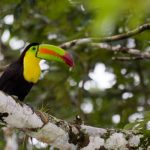New Orleans to San Jose, Costa Rica for only $125 roundtrip