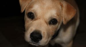 rescue dog 300x167 1