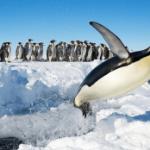 Australia criticised for Antarctica airport plan