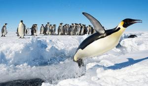 antarctica penguins 300x174 1