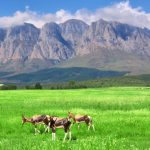 Toronto, Canada to Cape Town, South Africa for only $851 CAD roundtrip