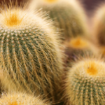 Woman sentenced after smuggling 1,000 cacti strapped to her body from China
