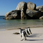 Stockholm, Sweden to Cape Town, South Africa for only €339 roundtrip
