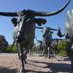 Non-stop from Cancun, Mexico to Dallas, Texas for only $208 USD roundtrip