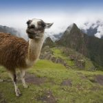 Charlotte, North Carolina to Lima, Peru for only $368 roundtrip