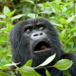 Geneva, Switzerland to Kigali, Rwanda for only €388 roundtrip