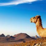 San Francisco to Algiers, Algeria for only $680 roundtrip